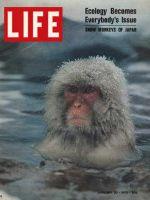 Life Magazine, January 30, 1970 - Snow monkeys