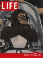 Life Magazine, February 10, 1961 - Astrochimp