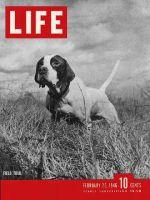 Life Magazine, February 25, 1946 - Best bird dogs