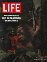 Life Magazine, March 28, 1969 - Orangutan
