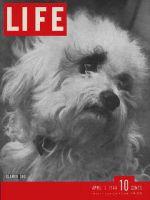 Life Magazine, April 3, 1944 - City dogs