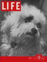 Life Magazine, April 3, 1944 - City dogs