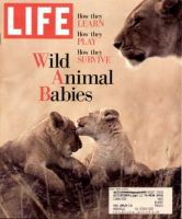 Life Magazine, May 1, 1995 - Wild Animal Babies, Lions