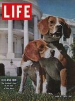 Life Magazine, June 19, 1964 - President Johnson's Beagles, dogs