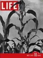 Life Magazine, July 5, 1937 - Corn Stalks