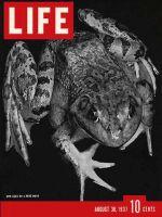 Life Magazine, August 30, 1937 - Frog Hunt