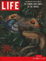 Life Magazine, September 20, 1954 - Rain forests