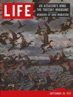 Life Magazine, September 28, 1959 - Migrating birds
