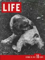 Life Magazine, October 25, 1937 - Hunting spaniel