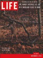 Life Magazine, November 8, 1954 - Woodland life