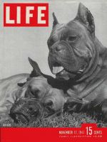Life Magazine, November 17, 1947 - Boxer dogs