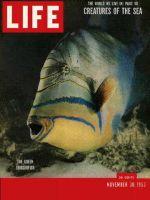 Life Magazine, November 30, 1953 - Sea creatures