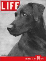 Life Magazine, December 12, 1938 - Champion Labrador Retriever