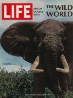 Life Magazine, December 22, 1967 - Bull Elephant