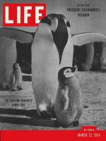 Life Magazine, March 22, 1954 - Emperor penguin