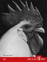 Life Magazine, April 26, 1937 - Leghorn Rooster