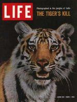 Life Magazine, June 25, 1965 - Tigers