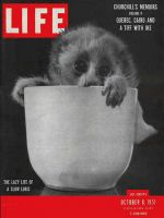 Life Magazine, October 8, 1951 - Slow Loris in cup