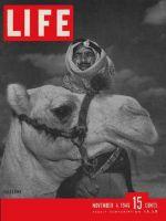 Life Magazine, November 4, 1946 - Palestine, camel