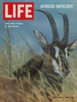 Life Magazine, December 5, 1969 - Antelope